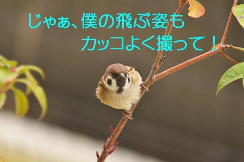 220_20121216203355.jpg