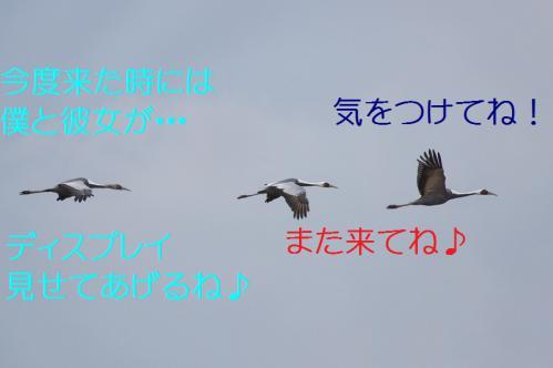 220_20121222194902.jpg