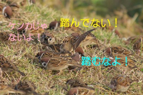 240_20121205221615.jpg