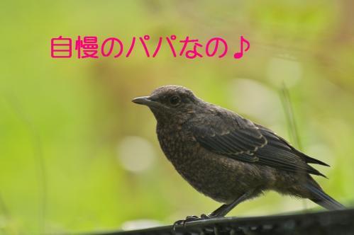 250_20120613233838.jpg