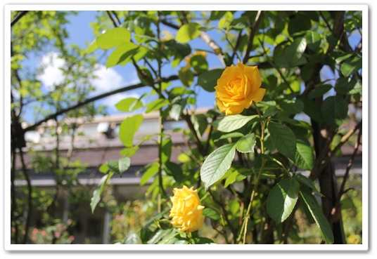IMG_3552-a.jpg
