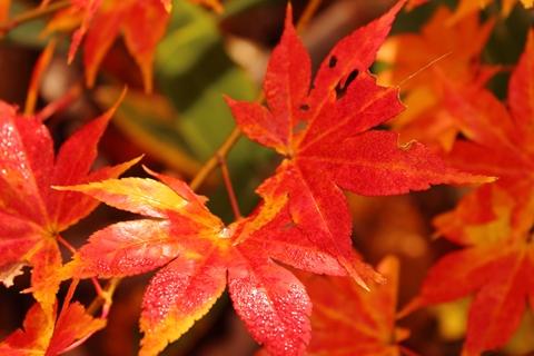 2012.10,30登別温泉の紅葉033