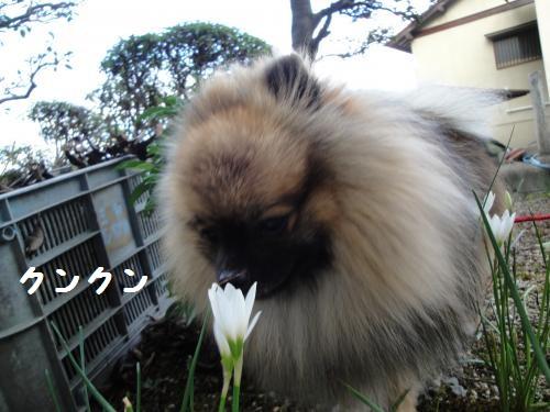 20120916花2