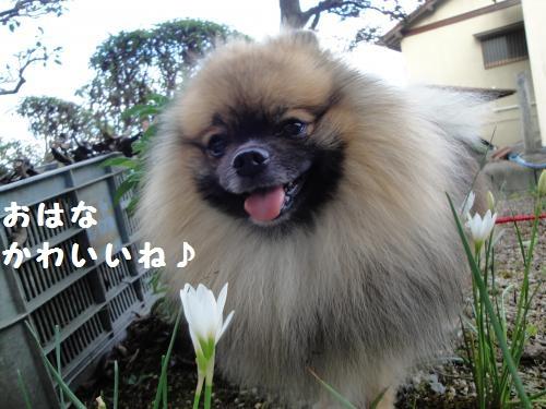 20120916花3