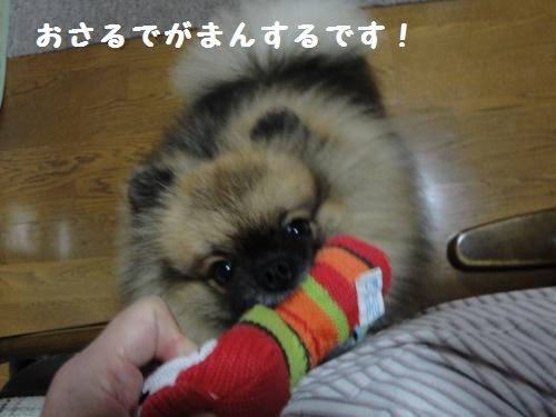 20120923おもちゃ4