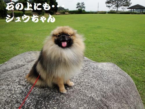 20120929公園4