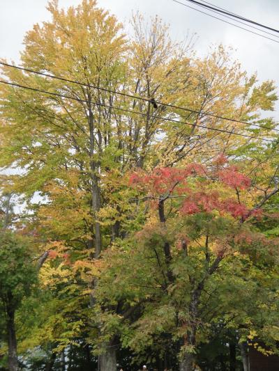 20121014支笏湖5