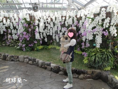 20121103hana-10.jpg