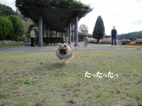 20121103soto-11.jpg