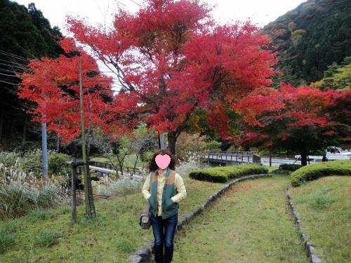 20121110koyo1.jpg