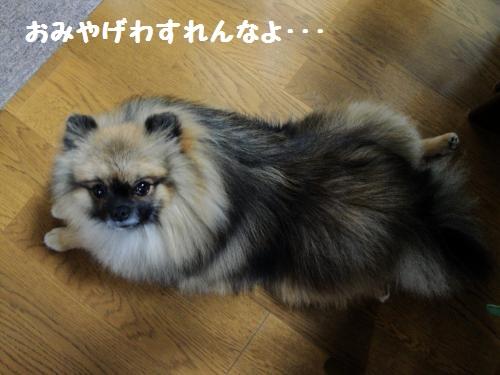 20121110koyo10.jpg
