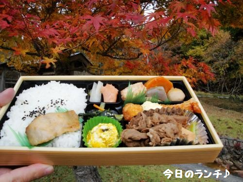 20121110koyo4.jpg