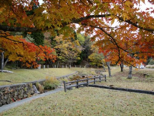 20121110koyo5.jpg