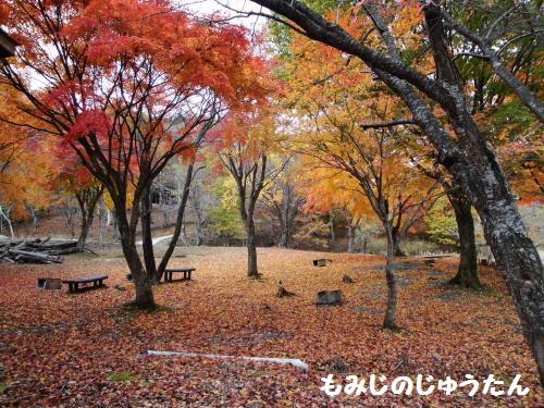 20121110koyo7.jpg