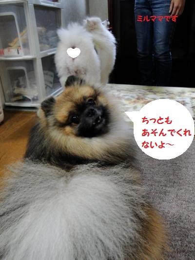 20121111ie4-.jpg
