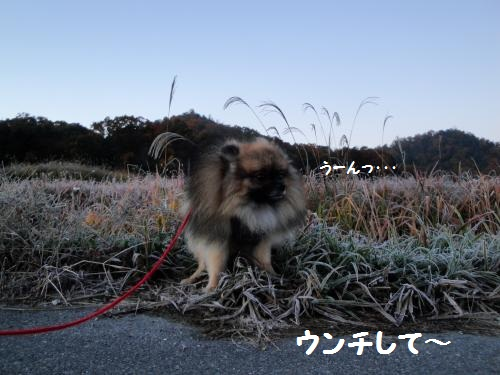 20121125-2.jpg