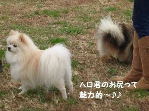 20121202ran-9.jpg
