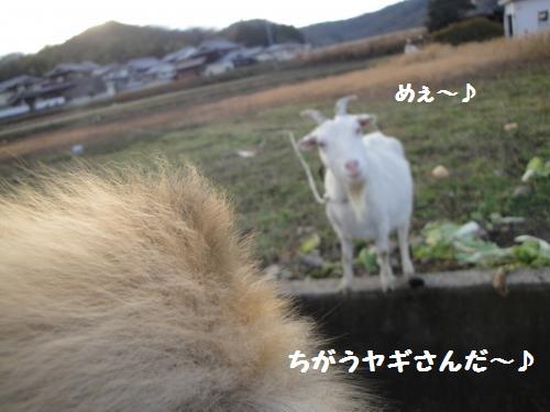20121223pm-6.jpg