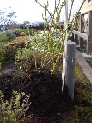 2012-11-20堆肥20cm盛る