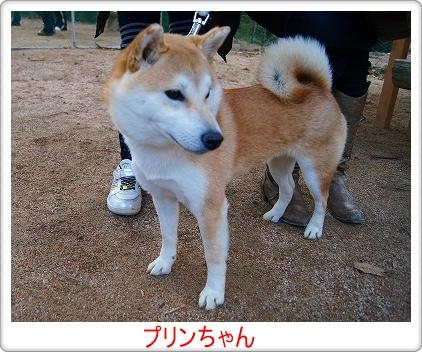 プリンちゃん(初)