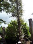 菩提樹と地蔵尊