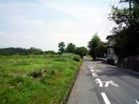 緑の広がる道