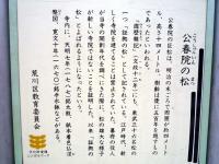 『公春院の松』