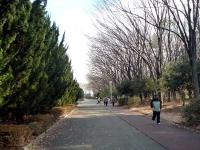園路とジョギングコース