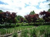 染谷花しょうぶ園