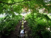 染谷花しょうぶ園 水路