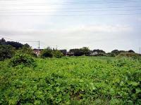 旧下平塚村の稲荷社方面へ