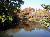 慶徳寺寺沼