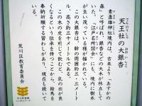 『天王社の大銀杏』