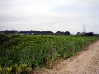 原市沼川の原風景