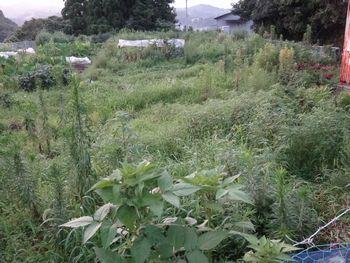 ウチの畑(サバ街道沿い)