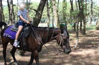 シーガイア乗馬