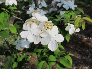 散策路の両側には様々な花が植えられている。