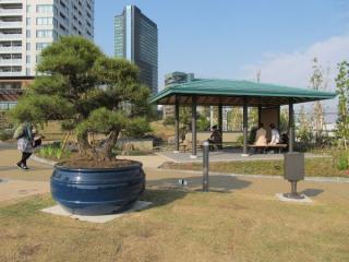 鉢に植えられた松の木と東屋