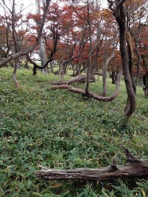 s-oodaigaharaIMG_1091.jpg