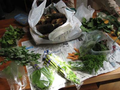 今日の山菜