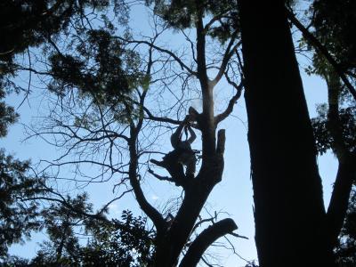 危険木枝落とし