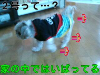 moblog_3cb90d6b.jpg