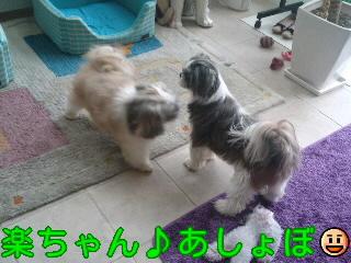 moblog_3e2b9663.jpg