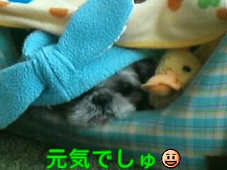 moblog_738fdac8.jpg