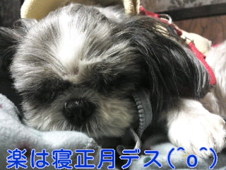 moblog_c14f5738.jpg