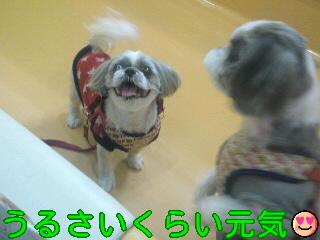 moblog_c66d4361.jpg