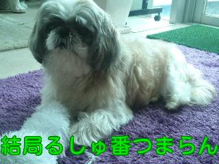 moblog_d1d56542.jpg