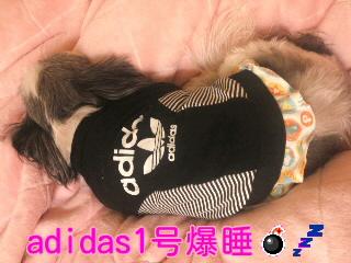 moblog_d5a0fbcb.jpg