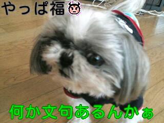 moblog_fbc49795.jpg