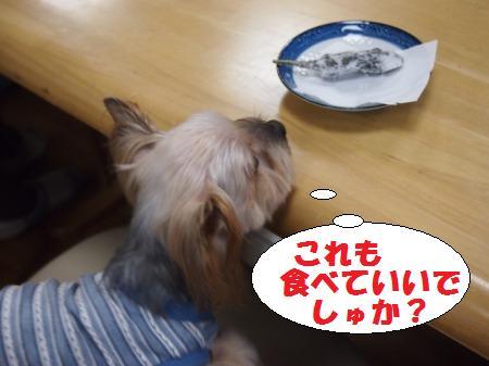 s_P1021441.jpg
